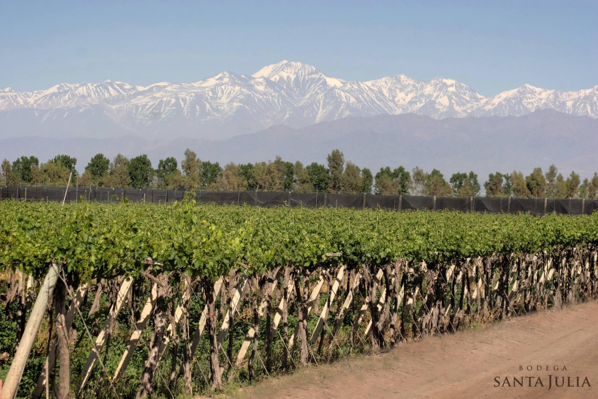 Comprar vinhos diretamente da adega Bodega Santa Julia | BODEBOCA