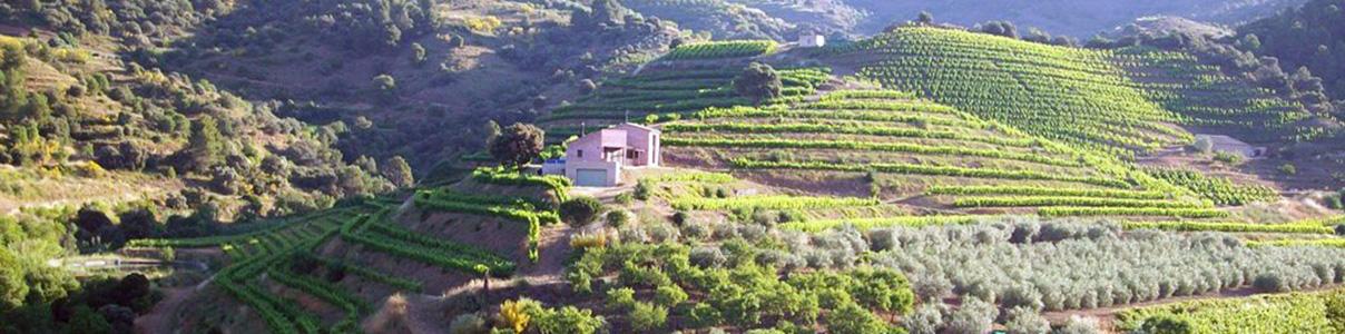 Acheter les vins Mas Martinet prix départ propriété | BODEBOCA